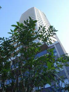 ロイヤルシーズン池田山【ホームズ】建物情報|東 …